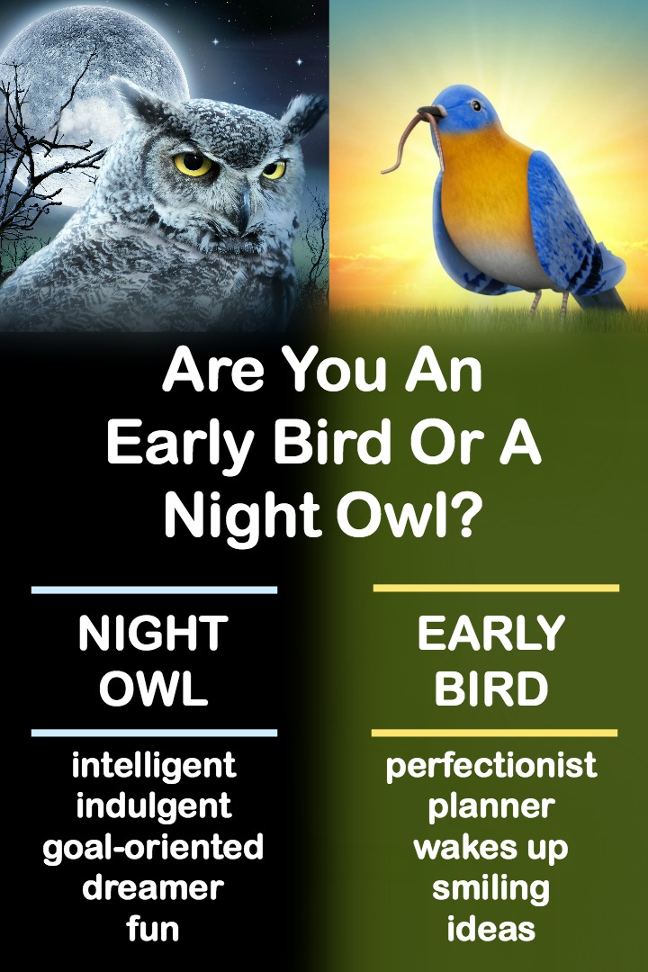 Are You An Early Bird Or A Night Owl? ~